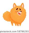 Cartoon pomeranian spitz. Vector illustration on a white background. 58786293