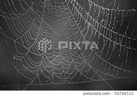 아침이슬,거미줄 58786522
