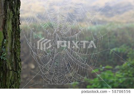 아침이슬,거미줄 58786556
