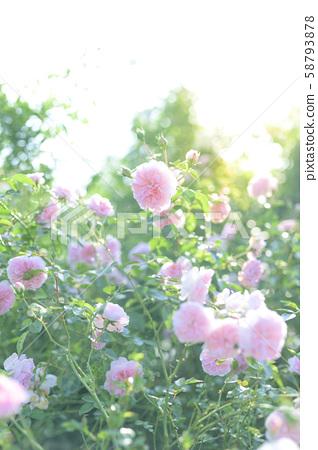 장미원 (이미지 컷) 58793878