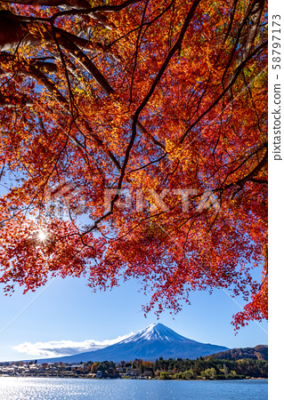 Mt. Fuji autumn leaves 58797173