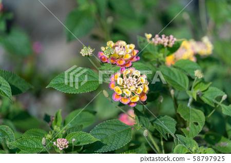 鮮豔的花朵 58797925
