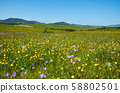 Wildflowers, hills and valleys in springtime 58802501