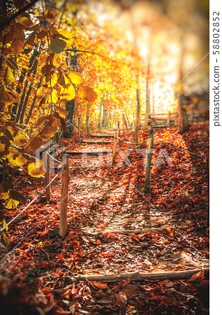 autumn path in the woods sunlight morning fall vertical 58802852