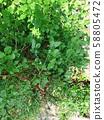 努克西奧國家公園的野草 58805472