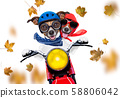 motorcycle  dog on autumn or fall 58806042