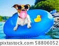 beach dog 58806052