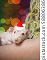 cute white domestic rat, symbol of the new 2020. 58806386