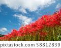 ดอกไม้ในท้องฟ้าใต้ท้องฟ้า 58812839