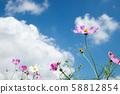 ดอกไม้สีชมพูคอสมอสภายใต้ท้องฟ้าสีคราม 58812854