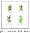 Beetle, Broad-Nosed Weevil and Buprestis Beetle 58818418