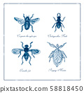 Carpenter Bee, Beetle, Oscinella Frit and Praying 58818450