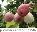 Exotic plant 58821587