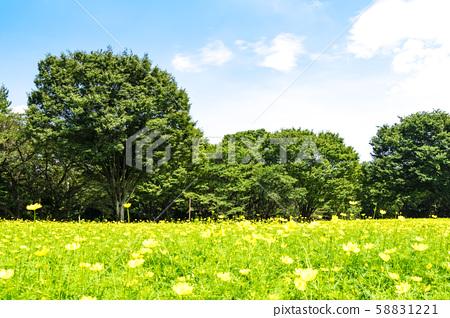 녹색과 푸른 하늘과 꽃밭이 펼쳐지는 풍경 58831221