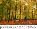 Beautiful scenery of the autumnal forest, Poland 58838577