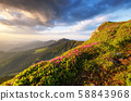 Mountains during flowers blossom and sunrise. Flowers on mountain hills. 58843968