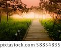 A Walk Way in Siam Tulip 58854835
