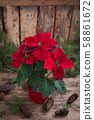 Christmas Red Poinsettia potted in wooden vintage 58861672