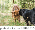 Two sweet puppies playing in a forest 58863715