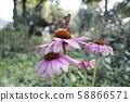 Autumn Flowers and Butterflies 58866571