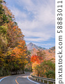 Autumn leaves of Ishizuchi Skyline! 58883011