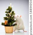 rat miniature fir tree background 58894050