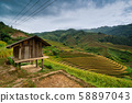 Close up of a small hut in terraced rice field in 58897043