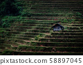 Close up of a small hut in terraced rice field in 58897045