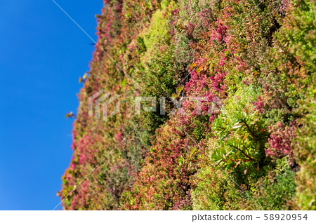 Green living wall, vertical garden exterior facade with flowers and plants on sunny summer day 58920954