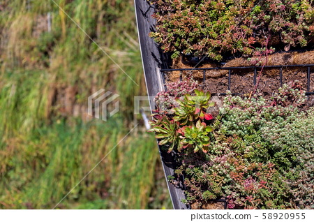 Green living wall, vertical garden exterior facade with flowers and plants on sunny summer day 58920955