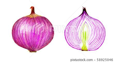 Purple onion (color pencil drawing) 58925046