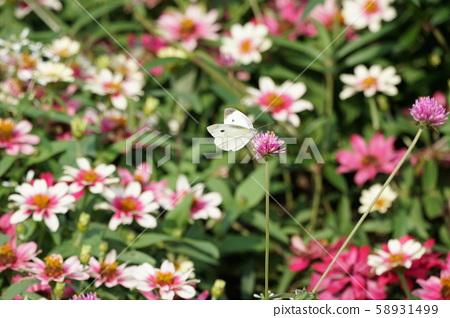 나비와 꽃 58931499