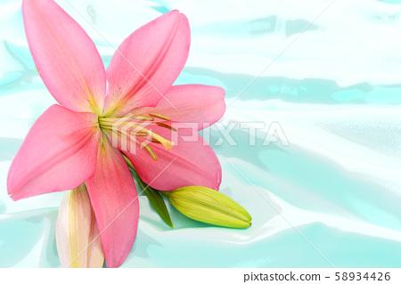 beautiful flower 58934426