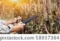 Farmer using tablet for checking plant quality  58937364