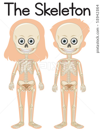 The skeleton on boy and girl 58942864