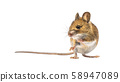 Beautiful mouse isolated on white background 58947089
