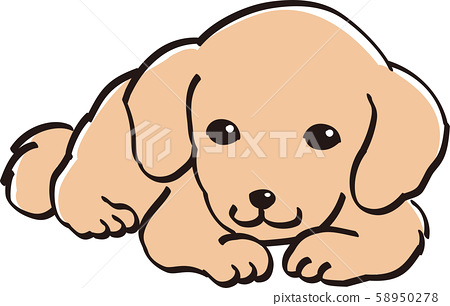 Dachshund Color Cute Puppy Popular Dog Stock Illustration