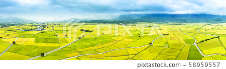 Aerial view of Beautiful Rice Fields in taitung . 58959557