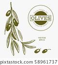 Olive branch illustration. Hand drawn vector food 58961737