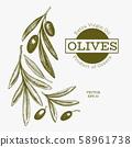 Olive branch illustration. Hand drawn vector food 58961738