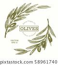 Olive branch illustration. Hand drawn vector food 58961740
