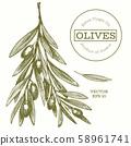 Olive branch illustration. Hand drawn vector food 58961741