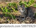 A staring kitten 58970929