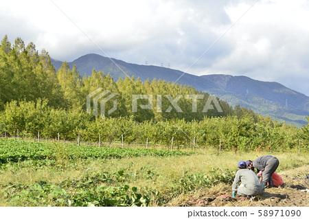 [高島市滋賀縣]水杉綠樹成蔭的道路和挖掘 58971090