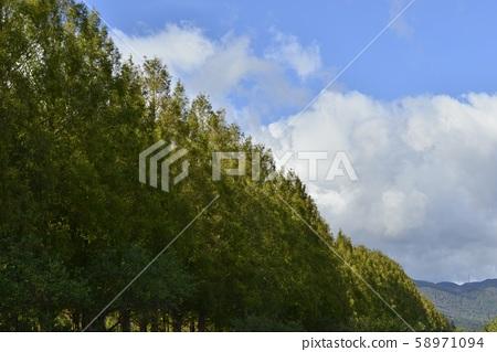 [滋賀縣高島市]水杉南木道 58971094