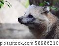 浣熊狗 58986210