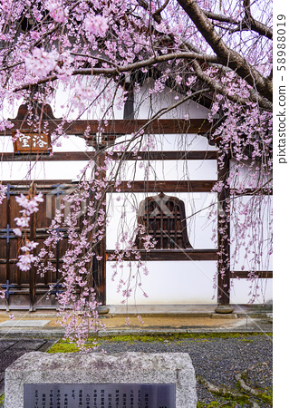Kenninji bathroom seen through the cherry blossoms 58988019