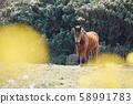 動物,馬,濟州島,油菜花 58991783