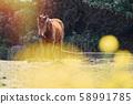 動物,馬,濟州島,油菜花 58991785