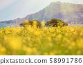 濟州島,強姦開花,韓國 58991786